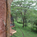 serengeti sopa lodge 11