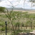 serengeti serena lodge 16