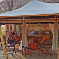 serengeti pioneer camp 4