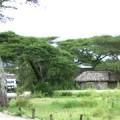 ndutu lodge 3