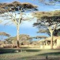 ndutu lodge 4