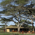 lemala ndutu camp 1