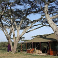 lemala ndutu camp 2