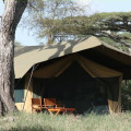 lemala ndutu camp 4