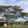 lemala ndutu camp 6