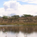 lemala ndutu camp 24
