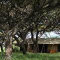 Lemala Ngorongoro Camp 1