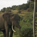Rhino Ngorongoro Lodge 14