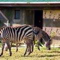 Rhino Ngorongoro Lodge 15