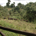 Rhino Ngorongoro Lodge 17
