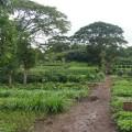 Gibb's Farm 7