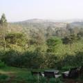 Gibb's Farm 20