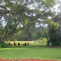 The Manor at Ngorongoro 29