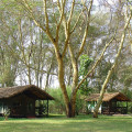 Migunga Tented Lodge 2