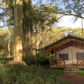 Migunga Tented Lodge 9