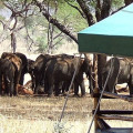 Swala Tented Lodge 1