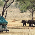Swala Tented Lodge 11