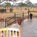 Swala Tented Lodge 25
