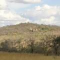 Tarangire Treetops Lodge 2