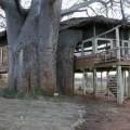 Tarangire Treetops Lodge 5