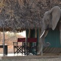 Tarangire Safari Lodge 7