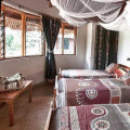 Tarangire Safari Lodge 12