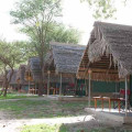 Tarangire Safari Lodge 17