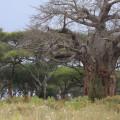 Tarangire Lemala Camp 15