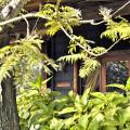 Arusha Coffee Lodge4