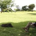 Kichwa Tembo Camp21