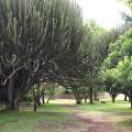Kichwa Tembo Camp23