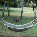Kichwa Tembo Camp27