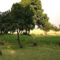 Kichwa Tembo Camp28