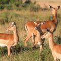 Kichwa Tembo Camp32