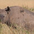Kichwa Tembo Camp38