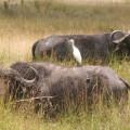 Kichwa Tembo Camp39