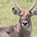 Kichwa Tembo Camp45