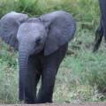 Kichwa Tembo Camp48