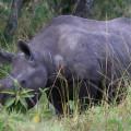 Kichwa Tembo Camp52