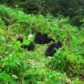 gorila trek2