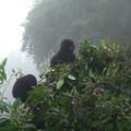 gorila trek3