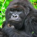 gorila trek5