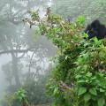 gorila trek6