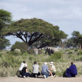 Kambi Ya Tembo - Sinya 1