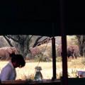 Kambi Ya Tembo - Sinya 21