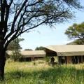 osupuko serengeti lodge 1