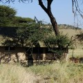 osupuko serengeti lodge 3