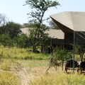 osupuko serengeti lodge 4