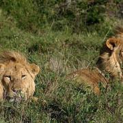 Safaris Tanzania: Como-cuando-donde al mejor precio. Viajes Tanzania privados en 4x4 Serengeti, Ngorongoro, Lago Manyara, Tarangire, Lago Eyasi y Zanzibar