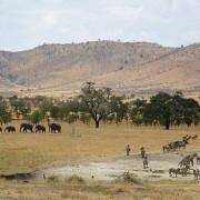 lobo valley norte serengeti 2